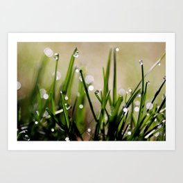 Early Morning Sparkle Art Print