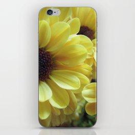 Yellow Daisy Mums iPhone Skin