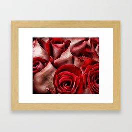 Velvet Roses Framed Art Print