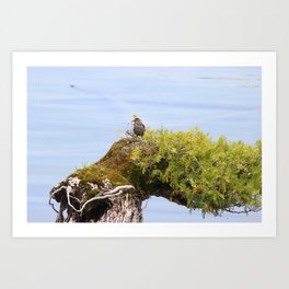 Crooked Tree with Bird Art Print
