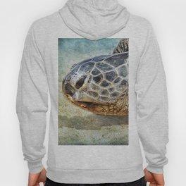 Green Sea Turtle Portrait Hoody