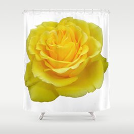 Beautiful Yellow Rose Closeup Isolated on White Shower Curtain