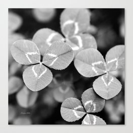 Clover Leaves Canvas Print