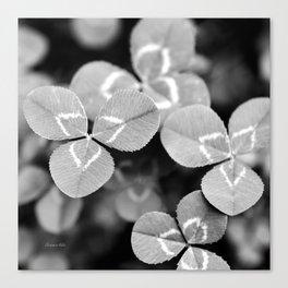 Clover Leaves Canvas Print