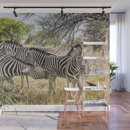 Zebras - Some Chilling, Some Not Wall Mural
