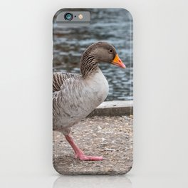Greylag goose by the River Bure, Norfolk Broads iPhone Case