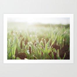 Morning Grass Art Print