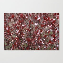 Bits of Spring Canvas Print