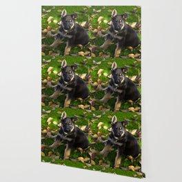 Little German Shepherd puppy Wallpaper