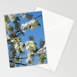 Cherry blossoms time in the garden Stationery Cards