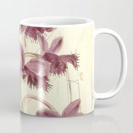 Epidendrum jamiesonis (as syn. Epidendrum evectum) Curtis' 97 (Ser. 3 no. 27) pl. 5902 (1871) Coffee Mug