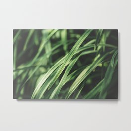 Blade of Grass Close Up Metal Print