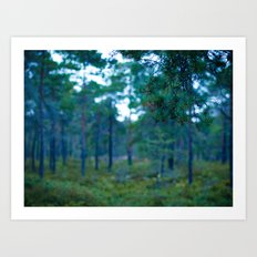 Another Forest Art Print