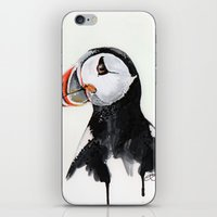 puffin iPhone & iPod Skins featuring Puffin by Paint the Moment