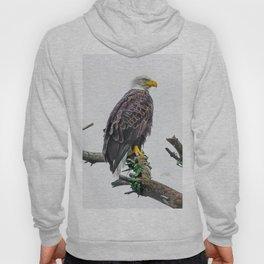 Bemidji Eagle II Hoody
