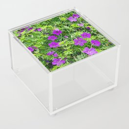 "TRUE SPECIE HARDY GERANIUM ""TINY MONSTER"" Acrylic Box"