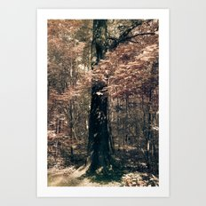 Tales from the trees 1 Art Print
