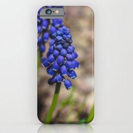 Grape Hyacinth 2 iPhone Case