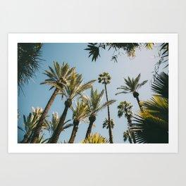Jardin Majorelle Art Print