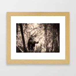 Watchful Elk Framed Art Print