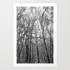 Beneath The Winter Trees Art Print