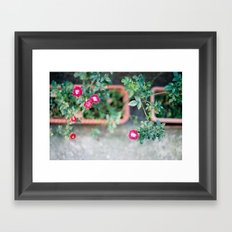 Roadside Flowers Framed Art Print