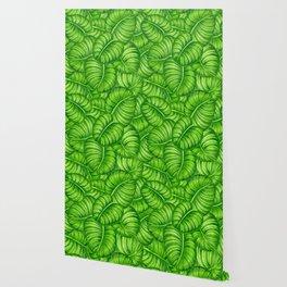 Calathea leaves Wallpaper