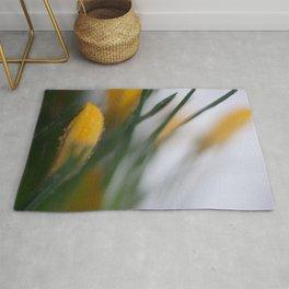 yellow crocus in spring Rug