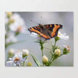 Butterfly By The Channel Canvas Print