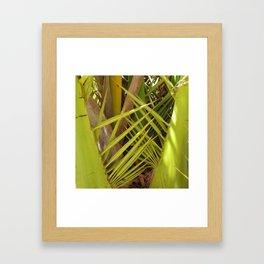 Palm tree leaves Framed Art Print