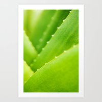 succulent Art Prints featuring Succulent by Andrea Gingerich