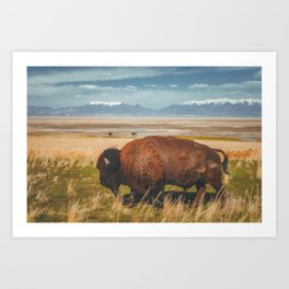 Wild Bison Utah Nature Art Print