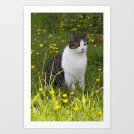 My Cat Crusha In the Buttercups Photograph Art Print