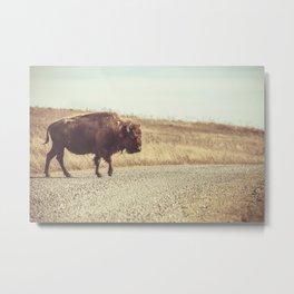 Bison Xing Buffalo Crossing Metal Print