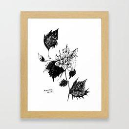 Acourtia nana Framed Art Print