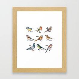 Cute Bird Animals Birdwatching Gift Framed Art Print
