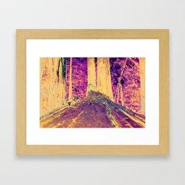Muir Woods Logs Framed Art Print