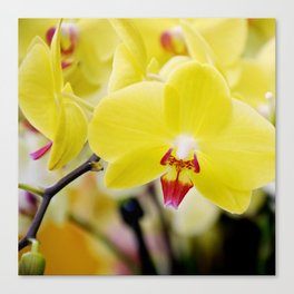 Close up Orchid #7 Canvas Print