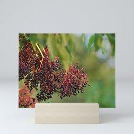 Elderberry Mini Art Print