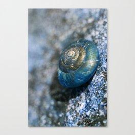 blue snail magic Canvas Print