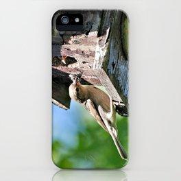 Tasty Bite for Baby Bird iPhone Case
