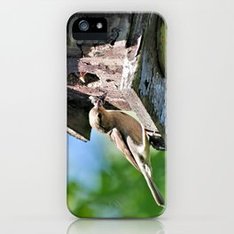 Tasty Bite for Baby Bird iPhone Case