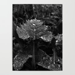 Raindrops of leaf, black and white Poster