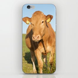 happy cow iPhone Skin