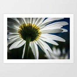 """""""White Flower"""" Art Print"""