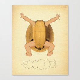 Anatomical Turtle Baby Canvas Print