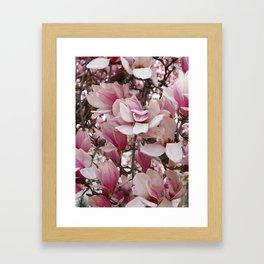 Pink Magnolia Blossom Framed Art Print