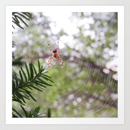 orb weaver spider and bokeh Art Print