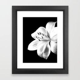 White Lily Black Background Framed Art Print