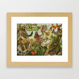 Butterflies & Caterpillars Framed Art Print